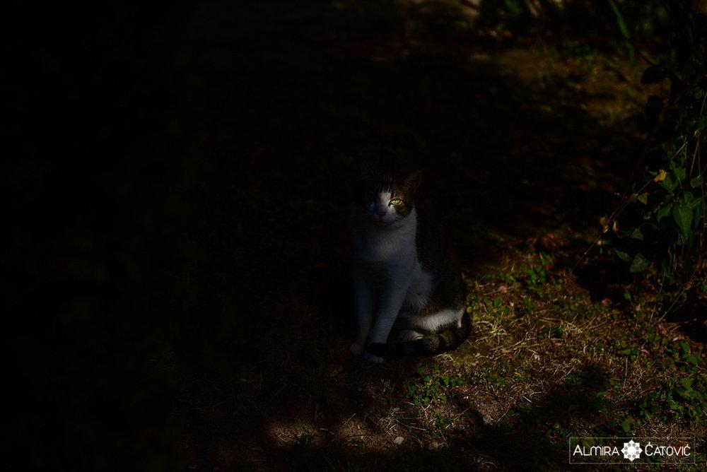 Mačke (9).jpg