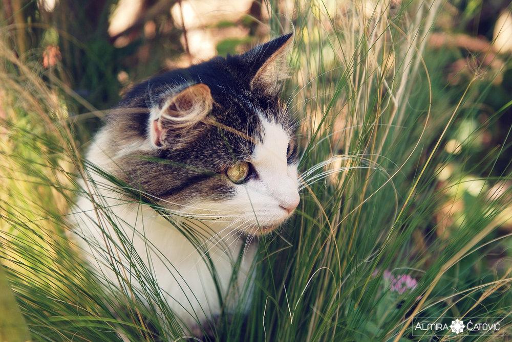 Mačke (13).jpg