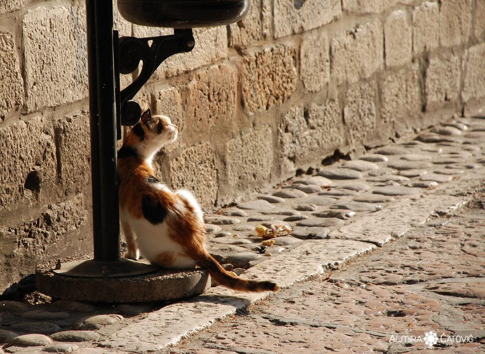 Mačke (14).jpg