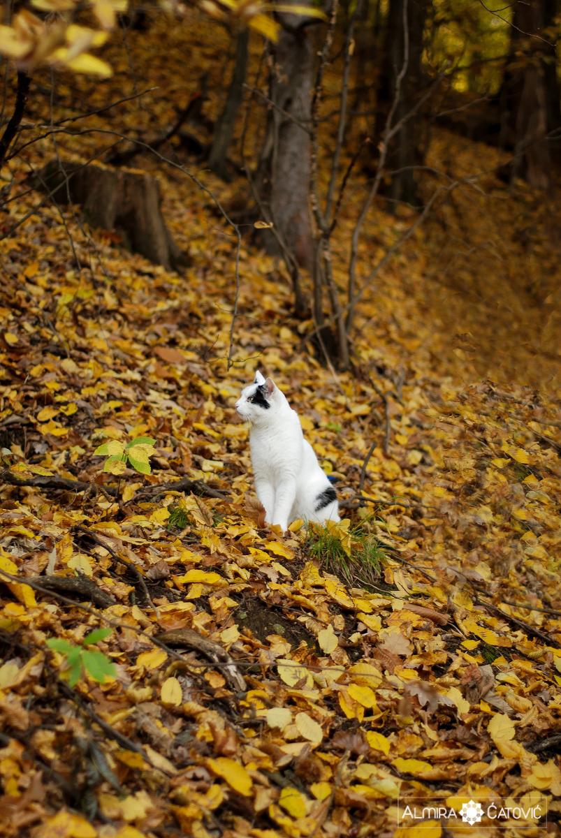Mačke (17).jpg