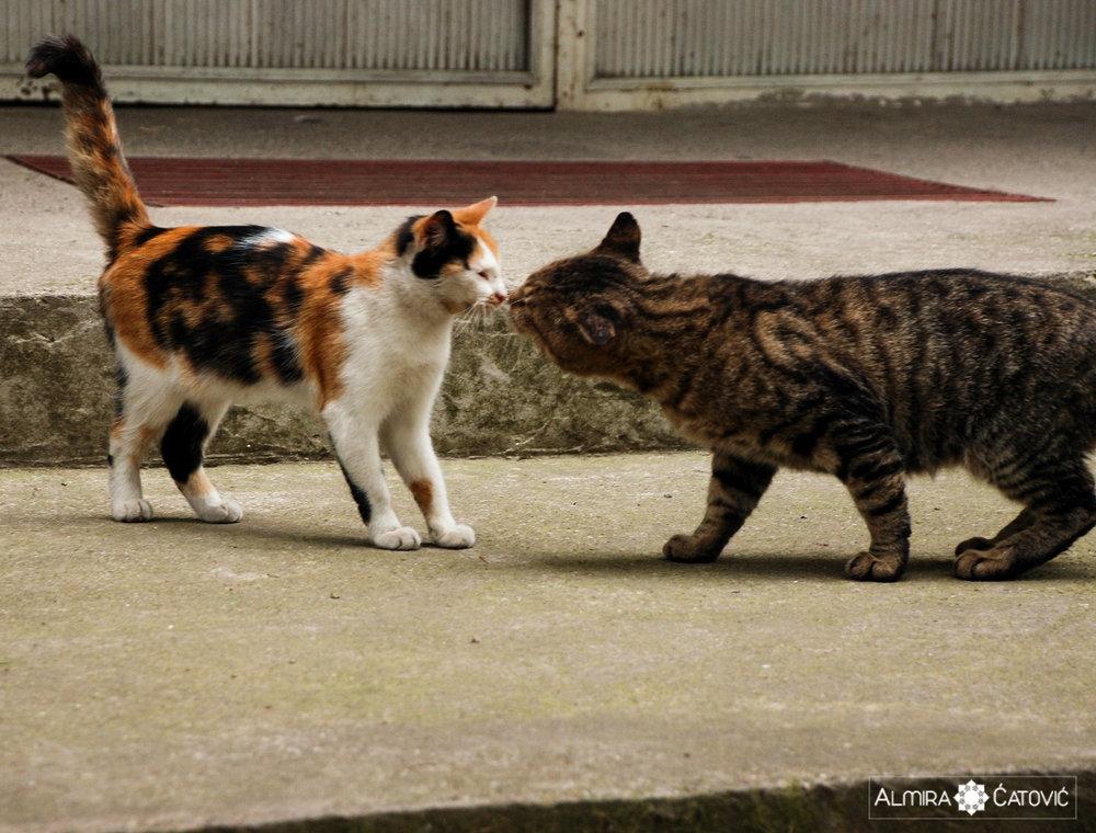 Mačke (18).jpg