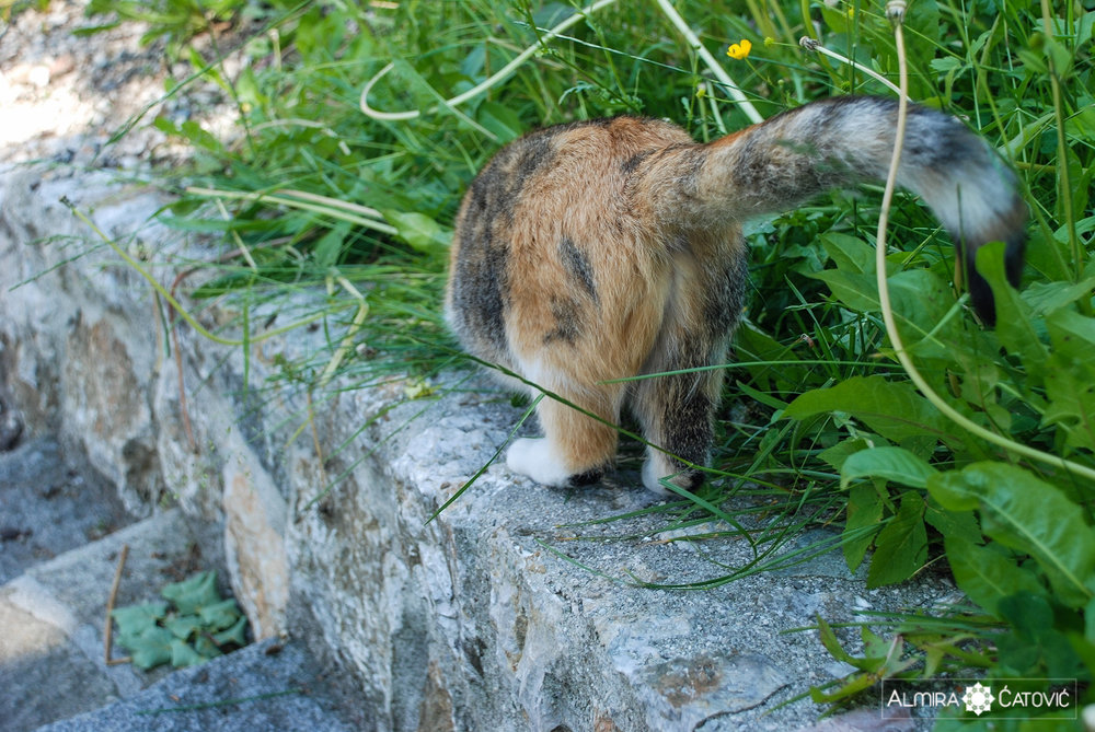 Mačke (19).jpg