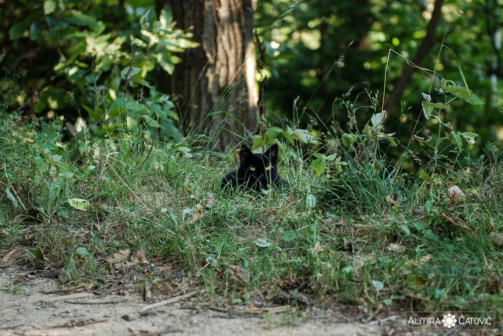Mačke (22).jpg