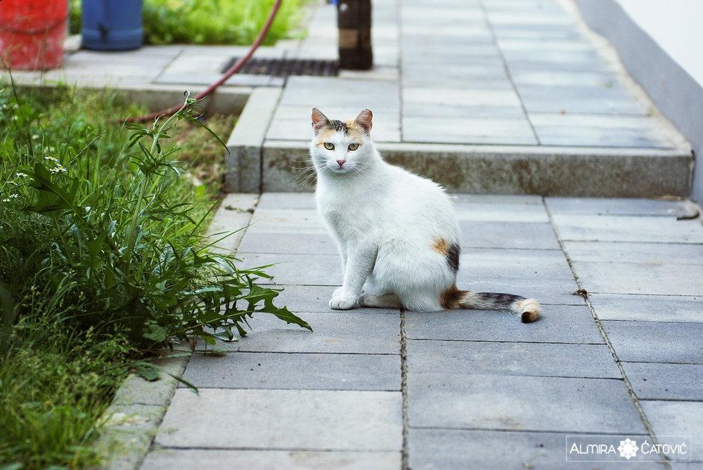 Mačke (27).jpg