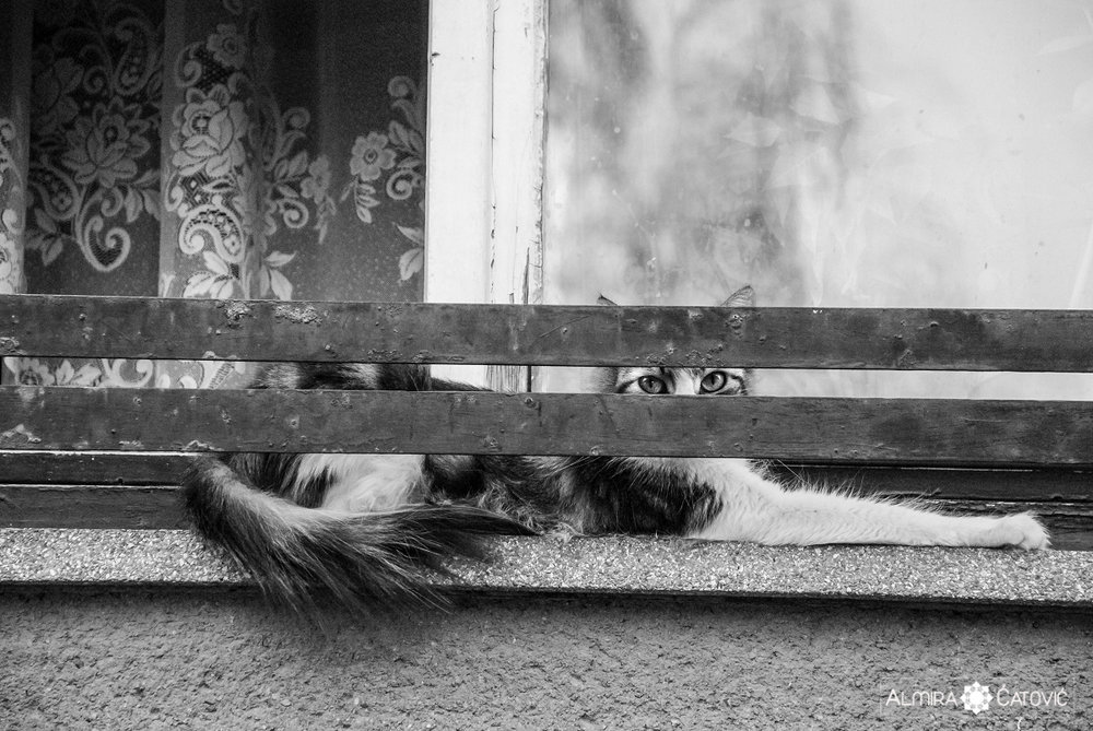Mačke (30).jpg