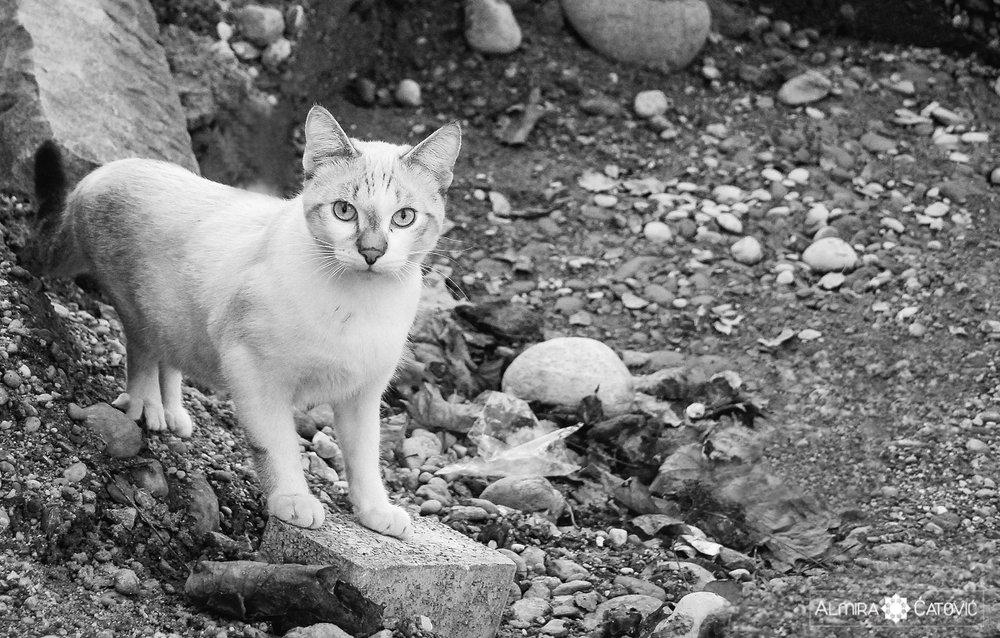 Mačke (31).jpg