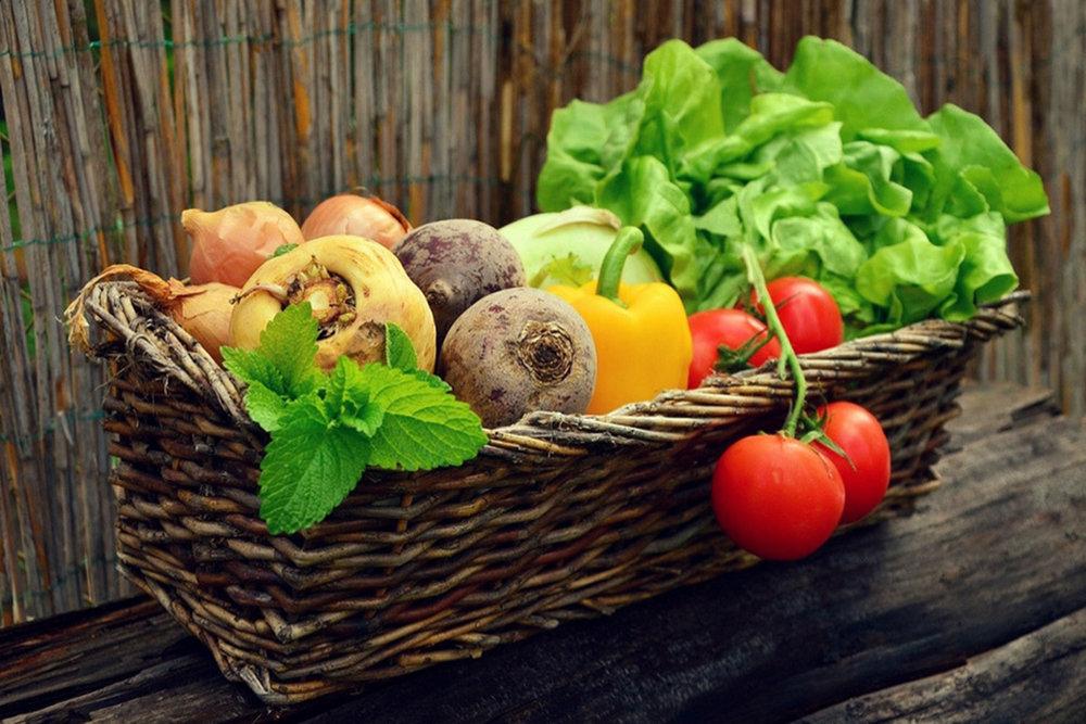 Hrana kot zdravilo - Razvoj Zemlje kot bitja je odvisen od duhovnega razvoja človeštva. Tako kot potrebuje človek plodove Zemlje za svoj razvoj, potrebuje Zemlja plodove človeškega duha. Iz vzajemnosti Zemlje in človeštva se bo razvil socialni organizem, novo duhovno bitje.