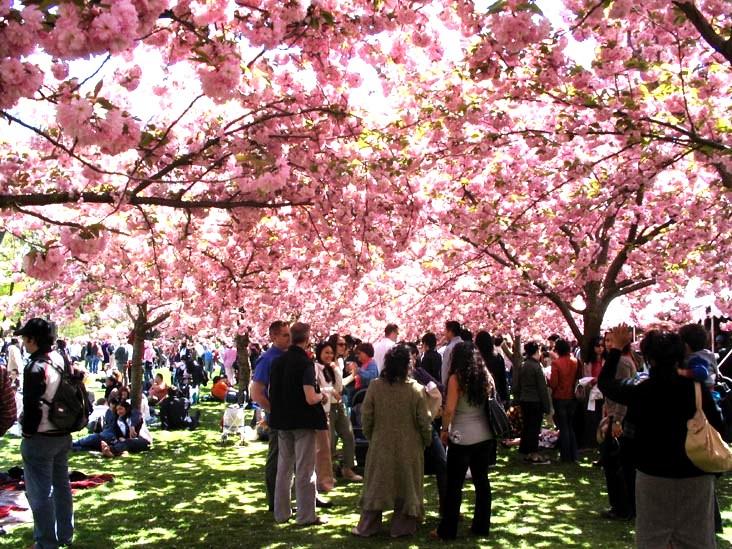 http://www.filipinosofny.com/2013/04/cherry-blossom-festival-sakura-matsuri.html