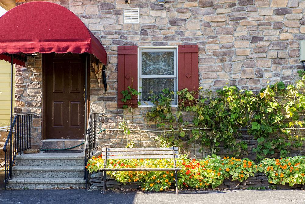 home side nasturtium herb garden.jpg