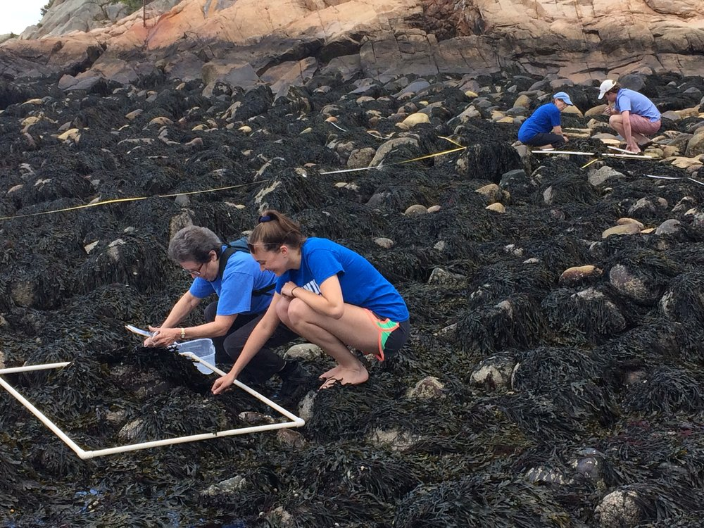 Intern Molly and Francie Caudill of Manchester Coastal Stream Team collect data to contribute to Salem Sound Coastwatch's almost 15 years of observations of species diversity at Black Beach in Manchester , MA