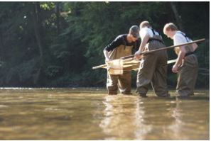 Participants examine freshwater invertebrates during a field study