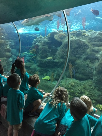 Great Ex campers take in the sights under the sea at the Florida Aquarium.
