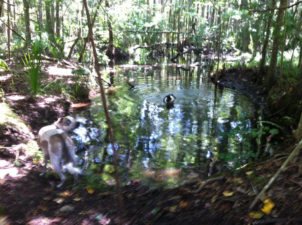 Olive and Keva in the puppy watering hole.