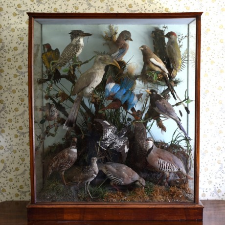 Stuffed birds in vitrine.