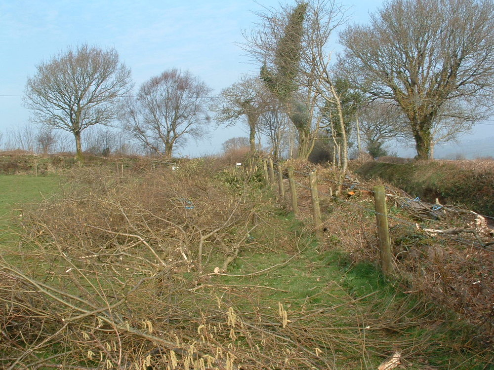 Hedge Laying in Progress