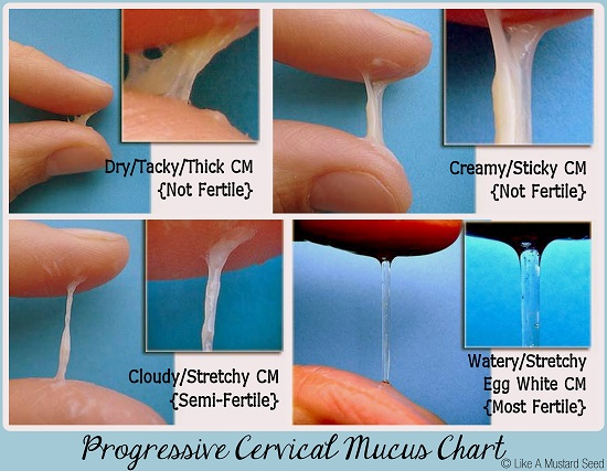 http://www.thymeandtimber.com/2013/01/05/cervical-mucus-essential-for-natural-fertility/