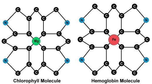 chlorophyll hemoglobin identical molecular structure