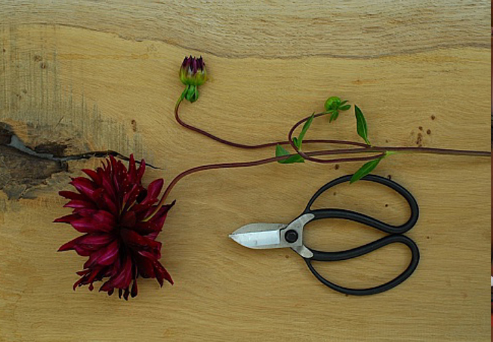 Jake Hobson - Våra japanska trädgårdsverktyg är framtagna i samarbete med den brittiske beskärningsexperten och trädgårdsskulptören Jake Hobson, som driver företaget Niwaki. Verktygen är tillverkade i Japan och håller i minst en livstid om de tas om hand och slipas då och då.[...]