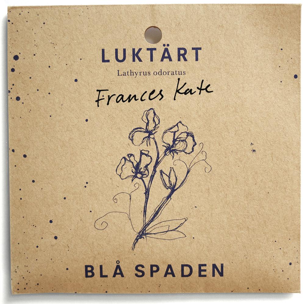 Frances Kate - Förnäm luktärt med krusade kronblad. Blomman är melerad med blålila penseldrag på vit grund.