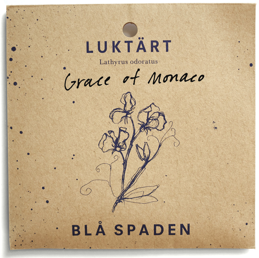 Grace of Monaco - En något ovanlig, rosalila ärt med fin doft. Passar bra i bukett, tar upp och förstärker andra färger.Daterad 1985.