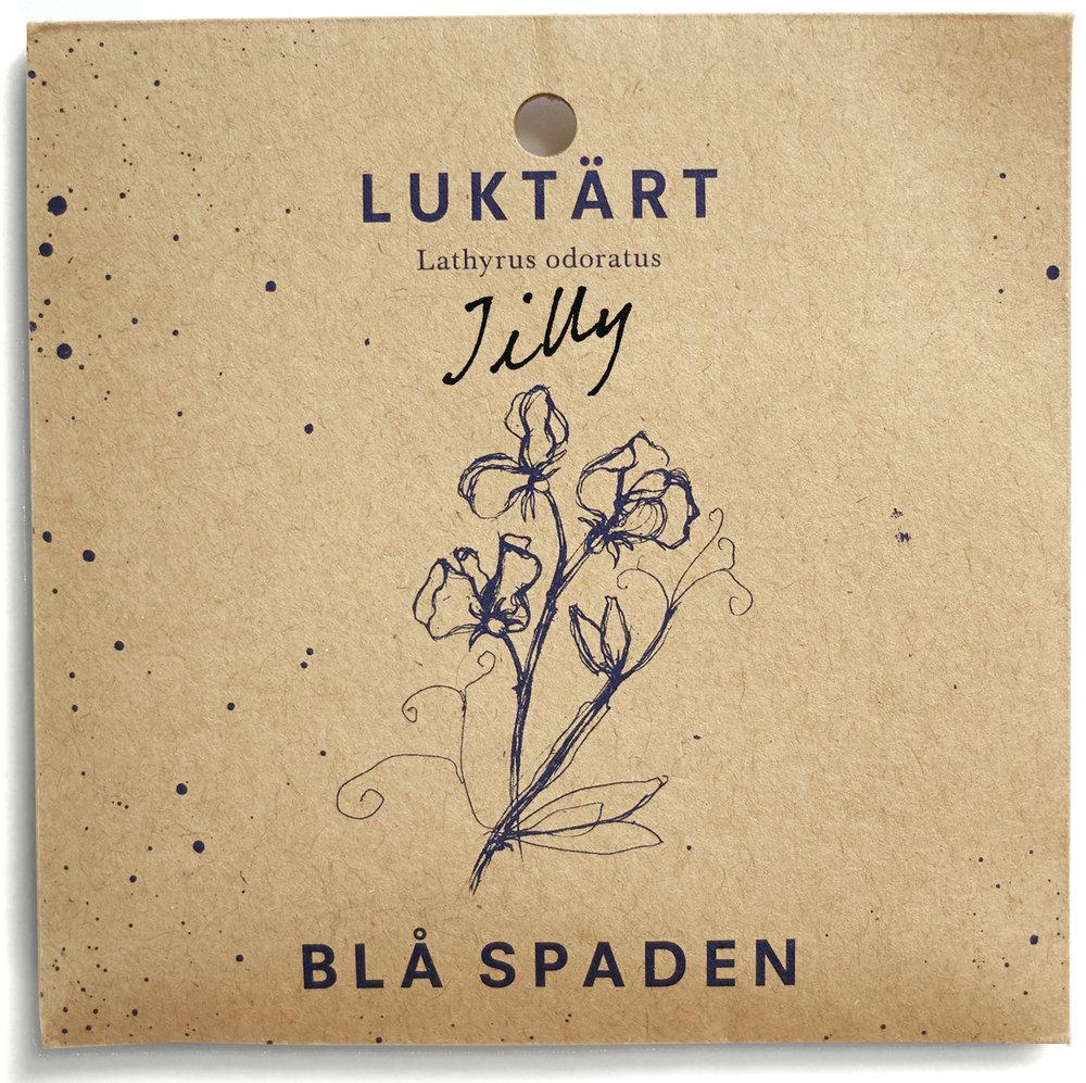 Jilly - En rik luktärt med cremefärgade blommor och fin doft. Bra snittblomma för vasen. Daterad 1988.