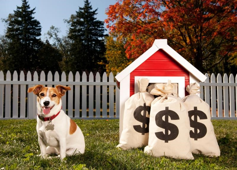 New Trends... Pets and Financial Planning.jpg