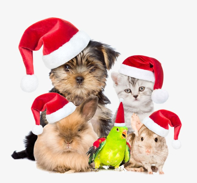 Four Fabulous holiday gift ideas for your pet.jpg