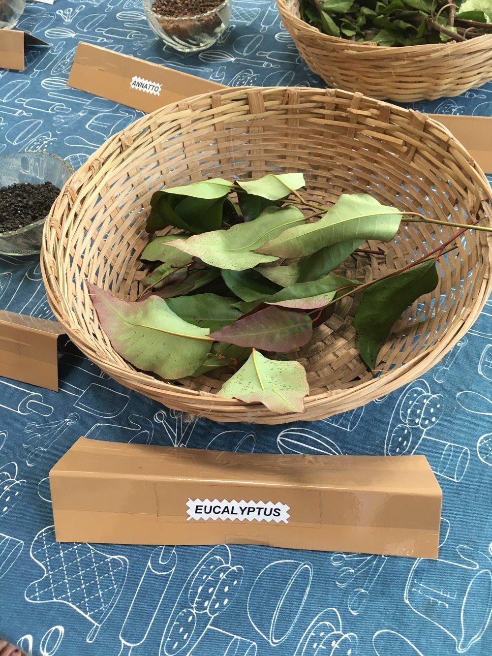 Eucalyptus leaves produce a gray dye