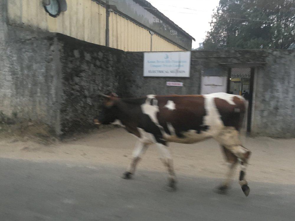 2-15India.jpg