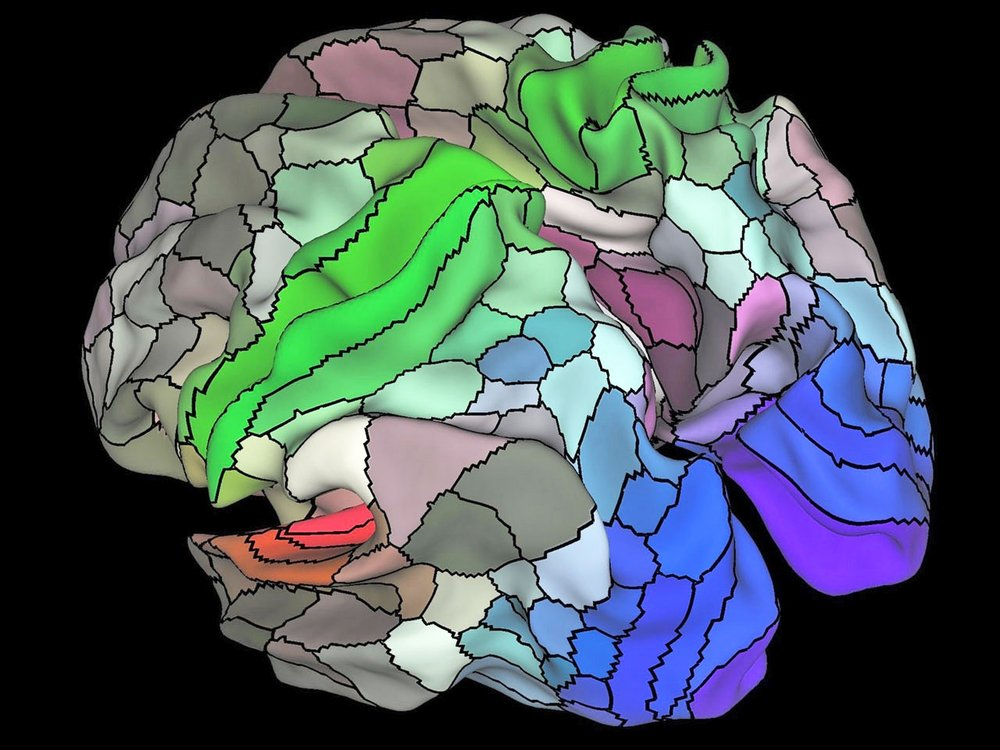 Functional brain areas mapped in the connectome project via Washington University in St. Louis