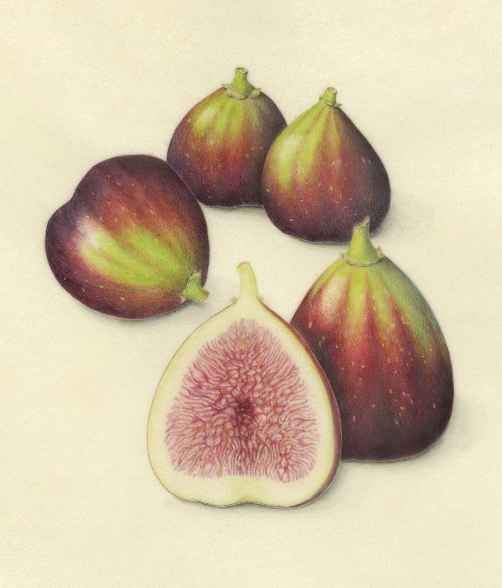 Black Mission Figs | Original Sold