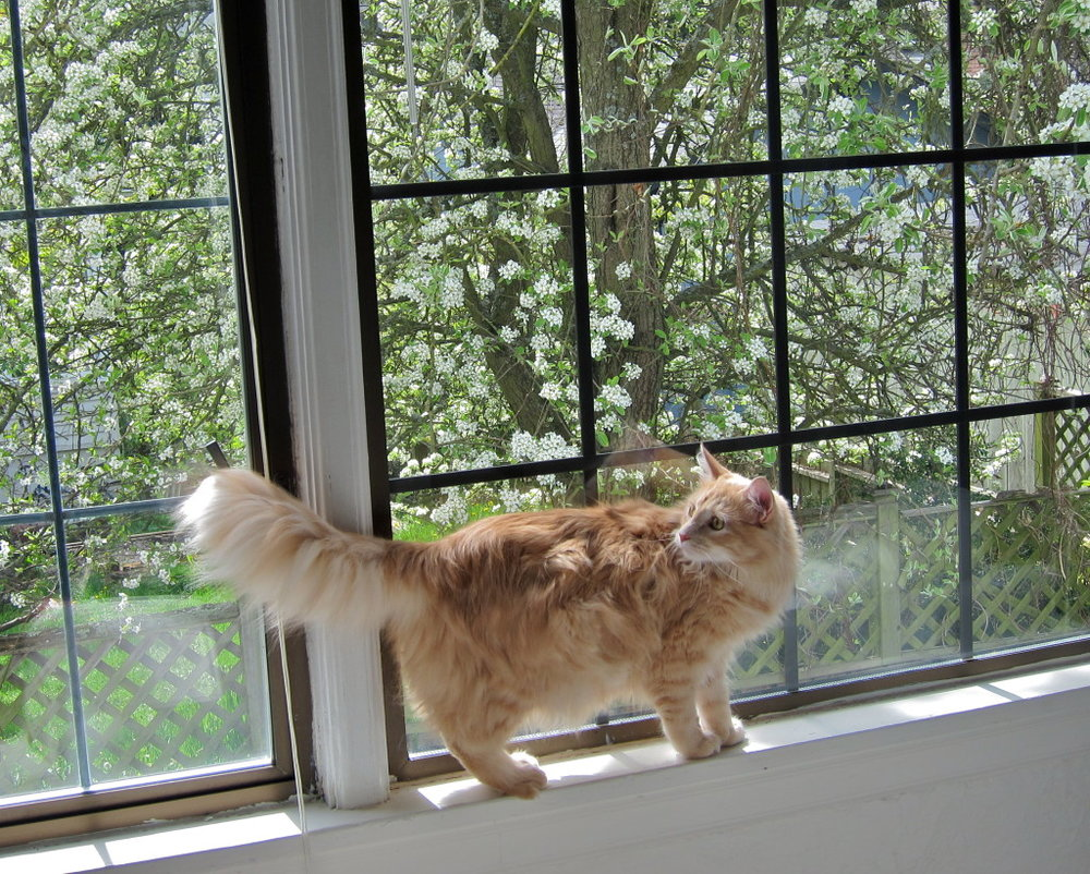 Bingley enjoying the view.