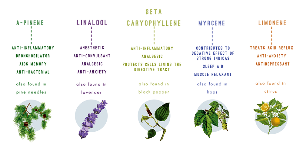 Examples of more commonly known and utilized terpenes, each with their own varying and increasingly useful effects.