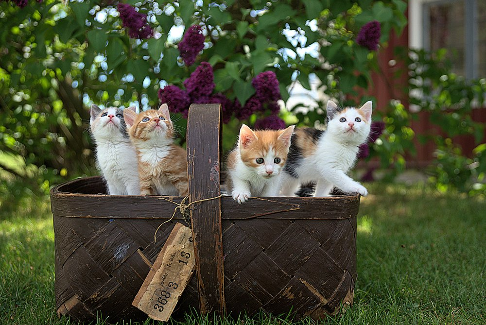 workwithme_kittens-in-basket_jari-hytonen-538885-unsplash.jpg