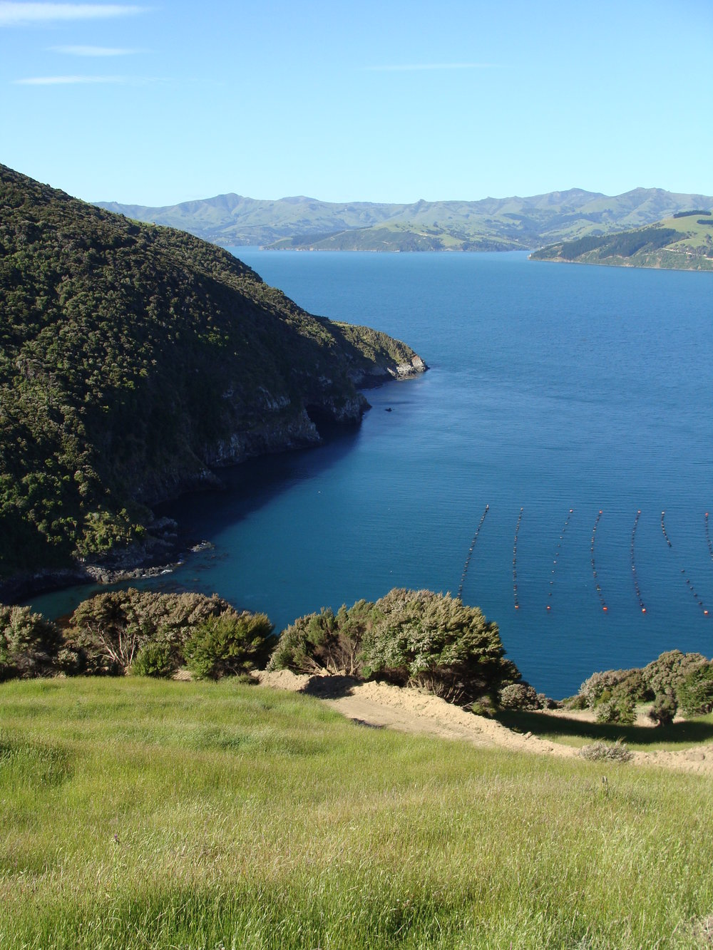 Overlooking the Paua Farm in Akaroa