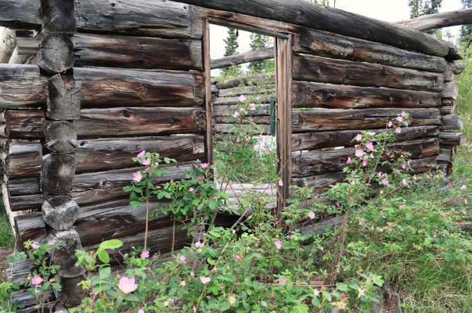 Old Cabin at Big Salmon village (at the conflence of Big Salmon and Yukon rivers). Photo by yukonmarty.