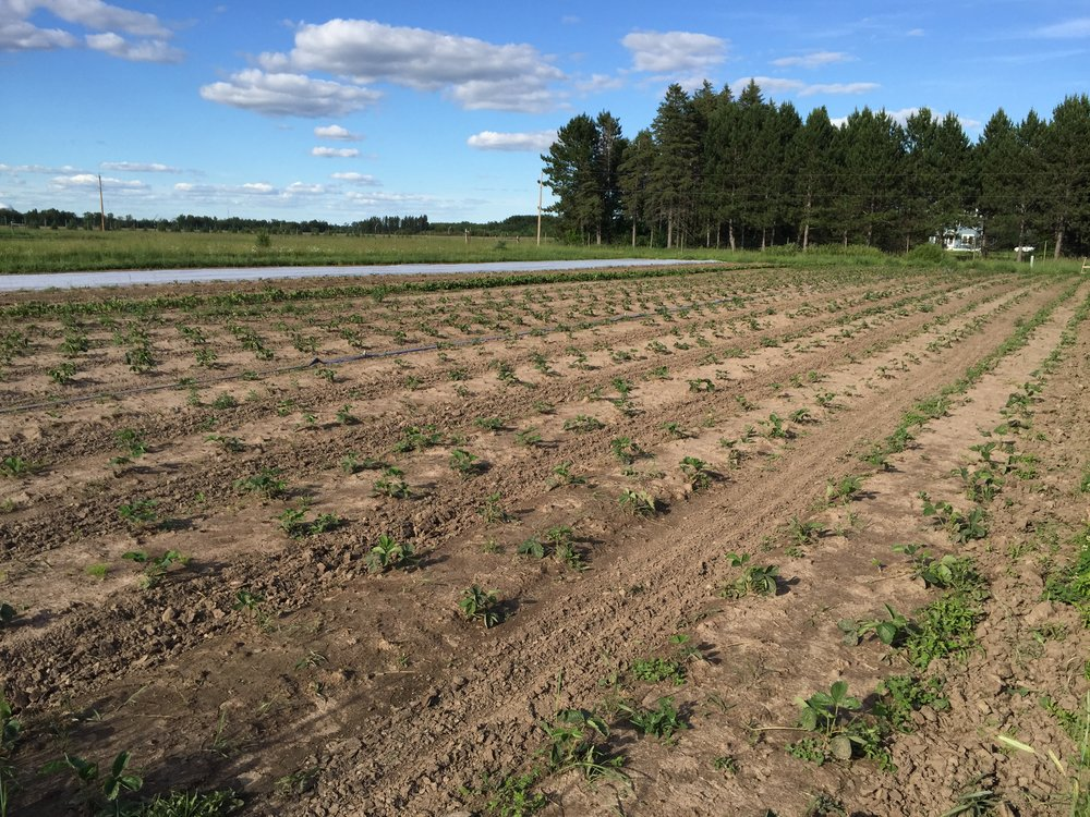 This is one of those photos that proves to me how nuts organic farmers are. All I see is the one bed that needs to be weeded.