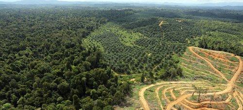 thumbnail_Palm-Oil-Plantation.jpg
