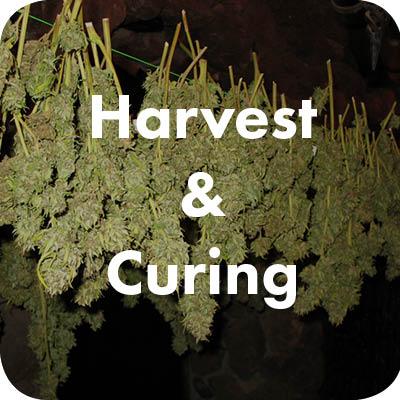 harvestcure
