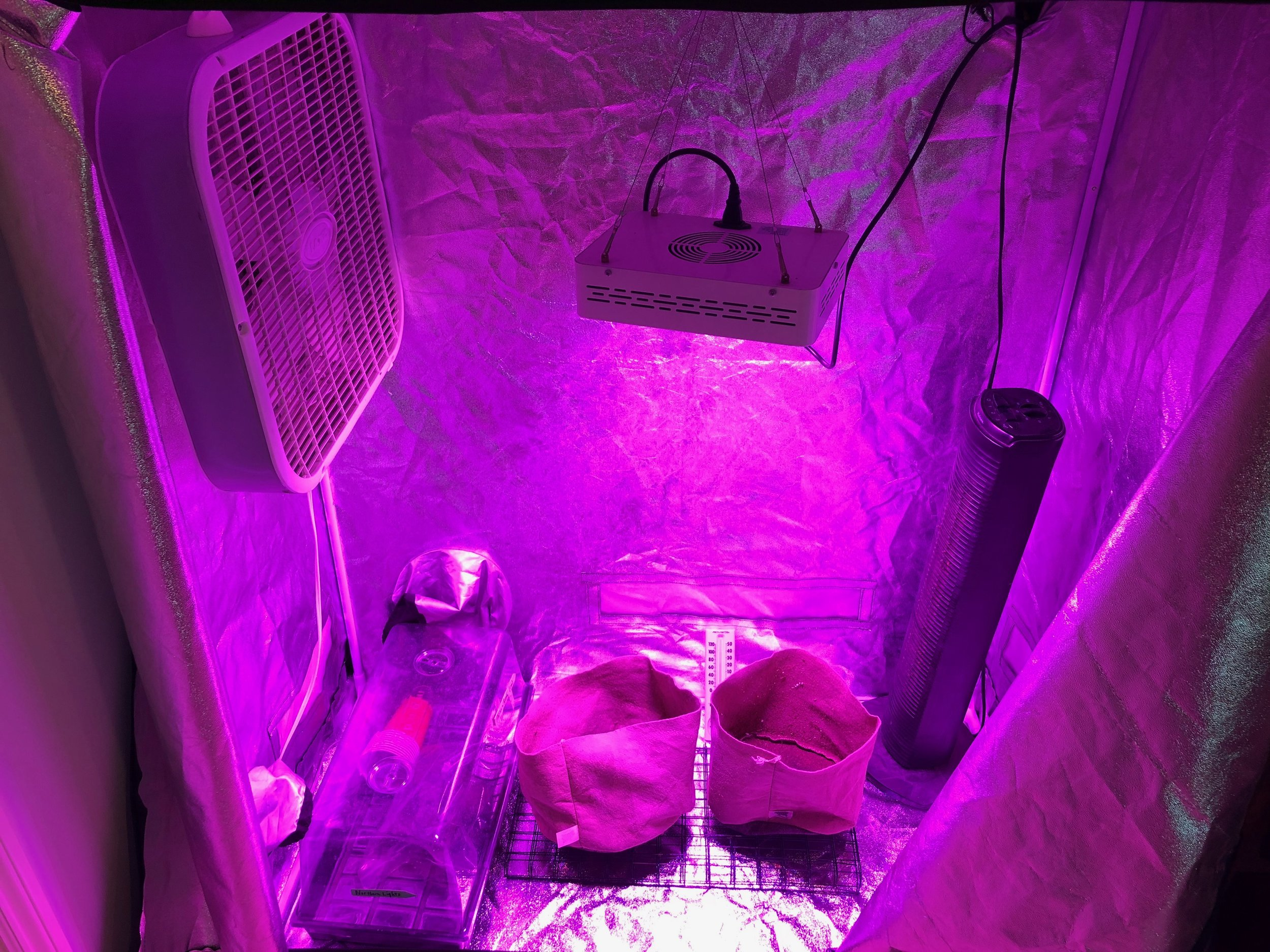 How to Setup the perfect 2X4 Indoor Cannabis Grow Tent Setup & How to Setup the perfect 2X4 Indoor Cannabis Grow Tent Setup ...