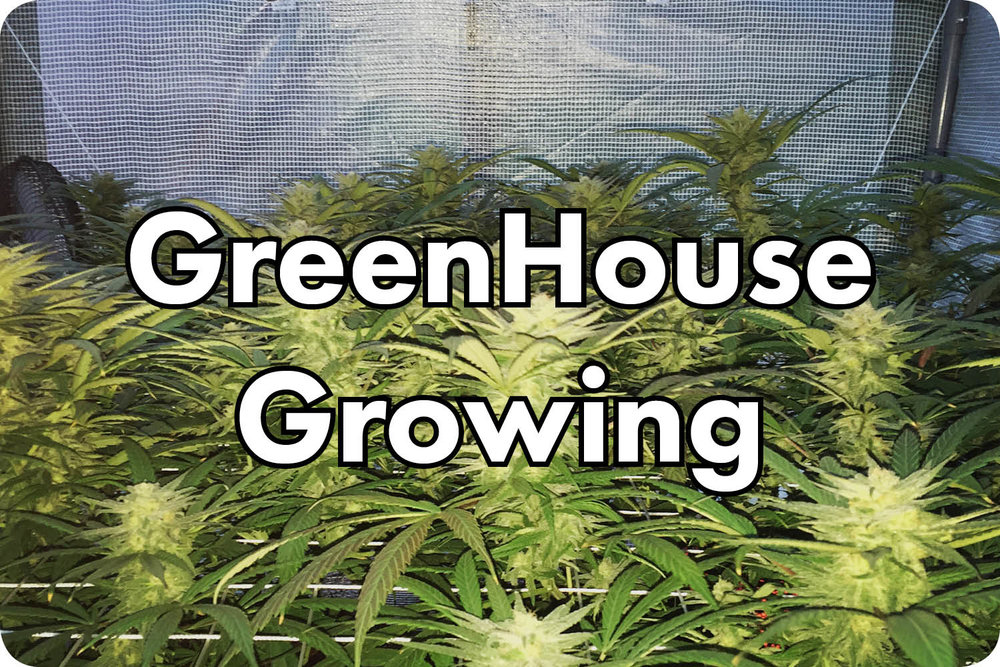 Greenhouse & Outdoor Growing