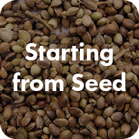 Starting+from+Seed.jpg
