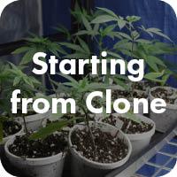 Starting+from+Clone+Series.jpg