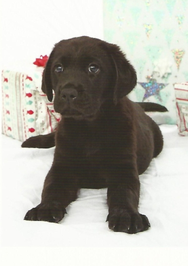 - Meet Berry, the latest addition to the eq team!  We are sponsoring Berry as she takes her first steps towards becoming a fully trained guide dog. She is just six weeks old in this picture and has a bubbly personality and a very enthusiastic tail! Click here to watch Berry's first