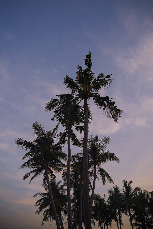 Bali (69 of 136).jpg