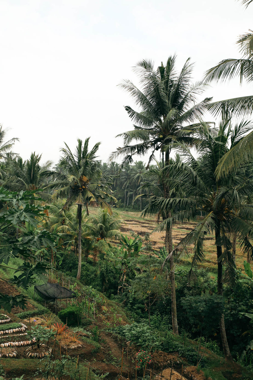 Bali (28 of 136).jpg