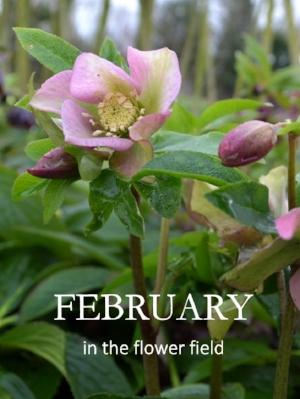 February in the Flower Field 18-01-2016 13-25-06 846x1127.JPG