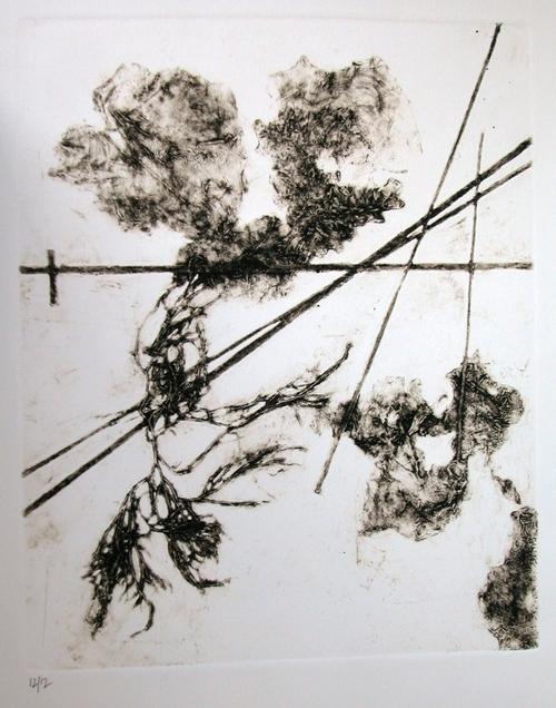 Due lattughe e altre alghe, 2009