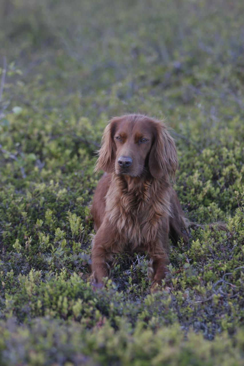 Jaffa - Årets unghund 2005