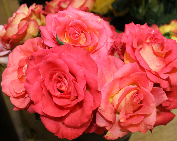 Pink Roses symbolize appreciation and gratitude to a loved one